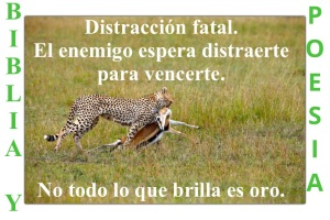Distraccion fatal