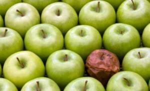 manzana podrida