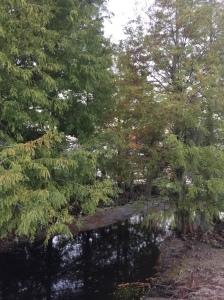 Pine & Lake